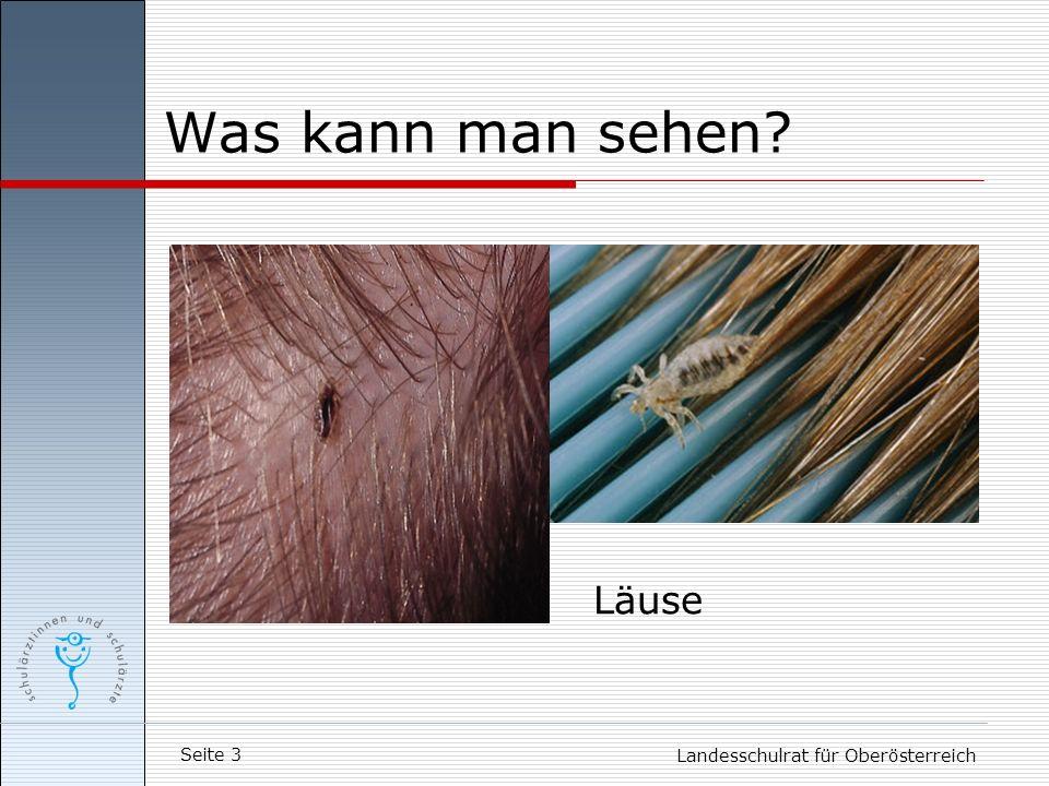 Seite 3 Landesschulrat für Oberösterreich Was kann man sehen? Läuse