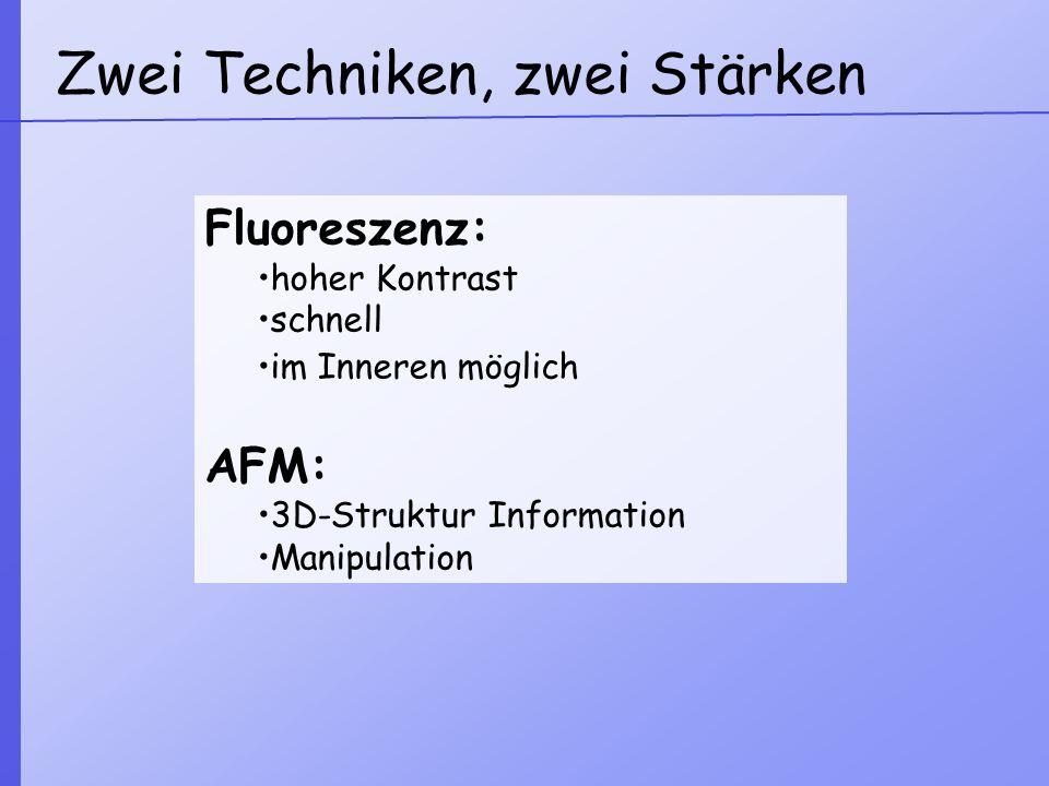 Zwei Techniken, zwei Stärken Fluoreszenz: hoher Kontrast schnell im Inneren möglich AFM: 3D-Struktur Information Manipulation