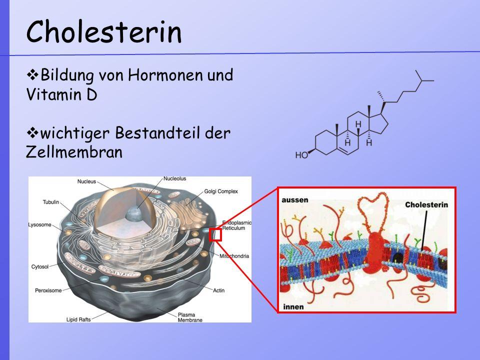 Cholesterin Bildung von Hormonen und Vitamin D wichtiger Bestandteil der Zellmembran