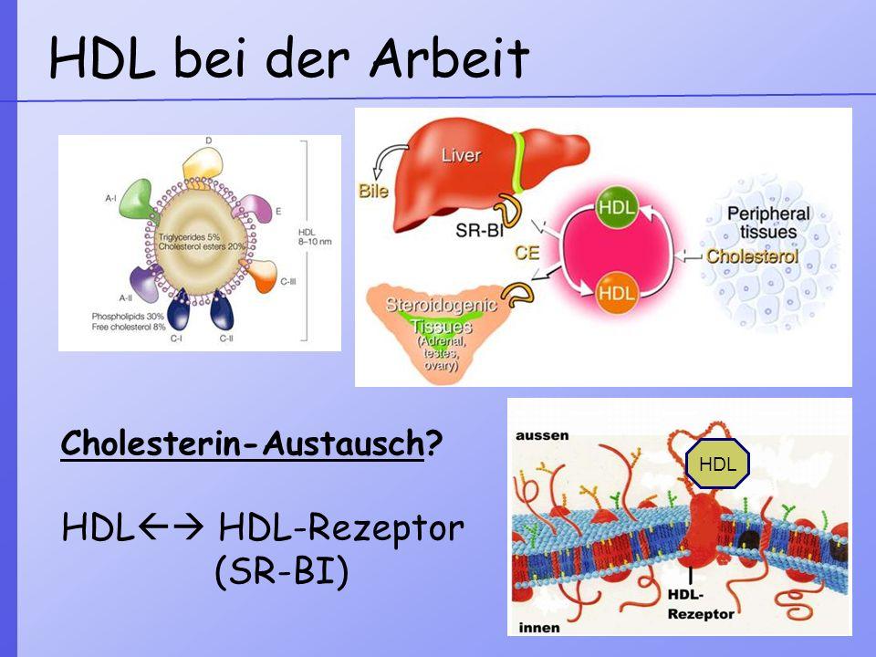 1)HDL – Rezeptor auswählen 2)AFM-Spitze direkt darauf setzen Rezeptorsuche