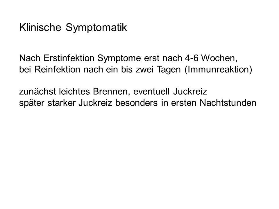 Klinische Symptomatik Nach Erstinfektion Symptome erst nach 4-6 Wochen, bei Reinfektion nach ein bis zwei Tagen (Immunreaktion) zunächst leichtes Bren