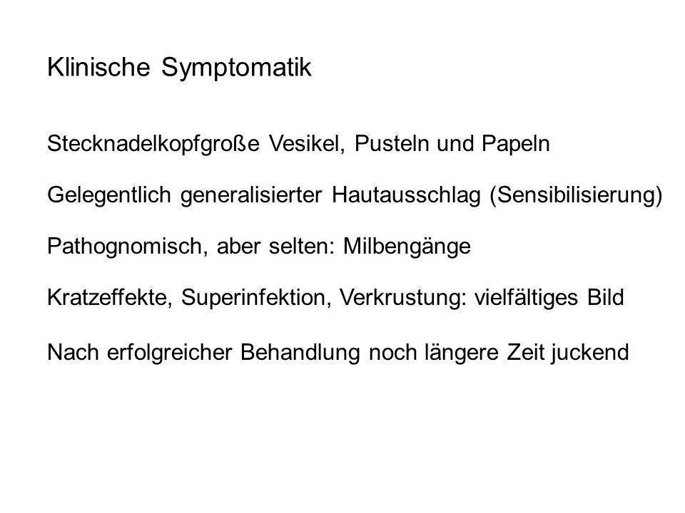 Klinische Symptomatik Gelegentlich generalisierter Hautausschlag (Sensibilisierung) Stecknadelkopfgroße Vesikel, Pusteln und Papeln Pathognomisch, abe