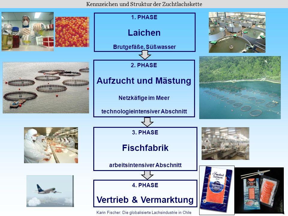 4 Kennzeichen und Struktur der Zuchtlachskette Karin Fischer: Die globalisierte Lachsindustrie in Chile 1. PHASE Laichen Brutgefäße, Süßwasser 2. PHAS