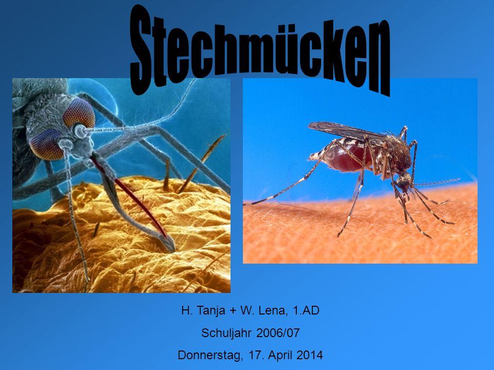 Stechmücken2 Inhaltsverzeichnis Bauplan der Mücke (Männchen/Weibchen) Vorkommen Lebenszyklus Symptome vom Parasit verursacht Übertragende Krankheiten Vorbeugung und Bekämpfung Quellen