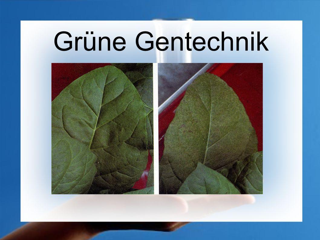 Was ist grüne Gentechnik.