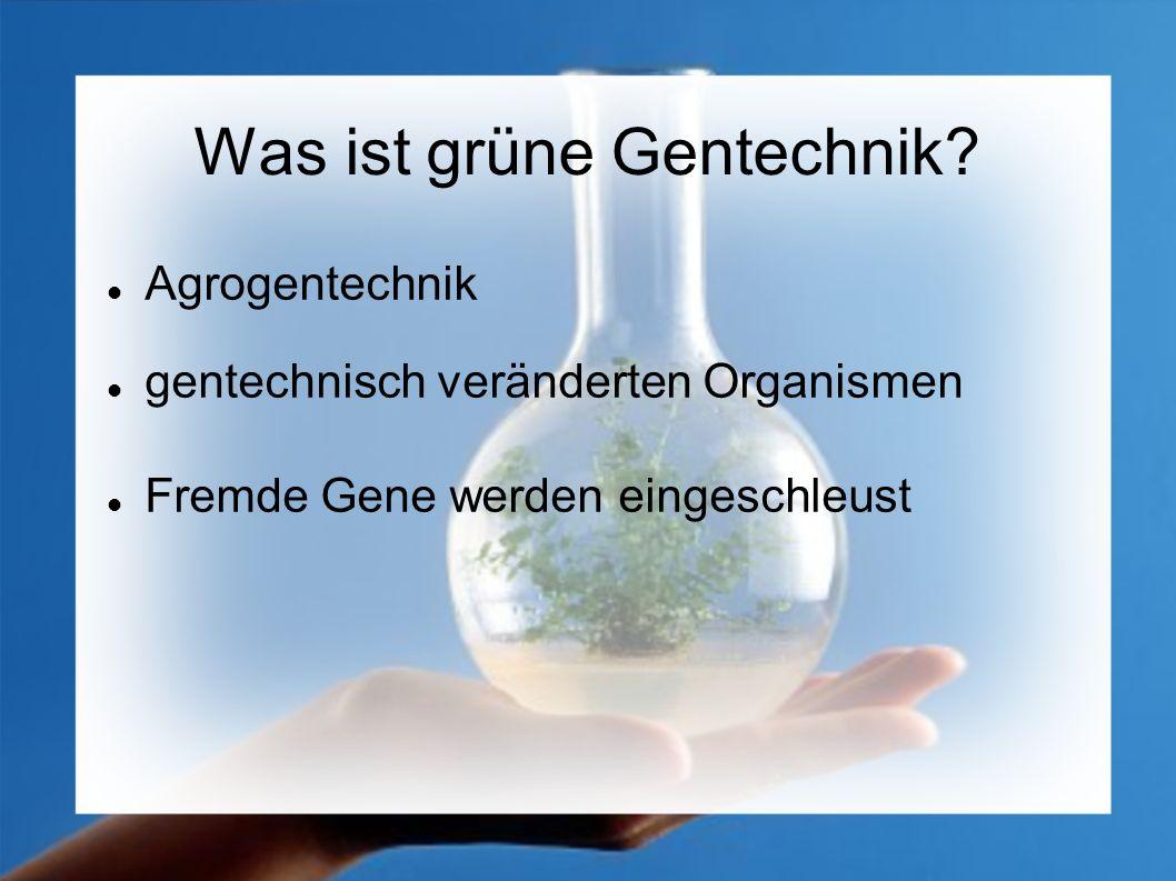 Was ist grüne Gentechnik? Agrogentechnik gentechnisch veränderten Organismen Fremde Gene werden eingeschleust
