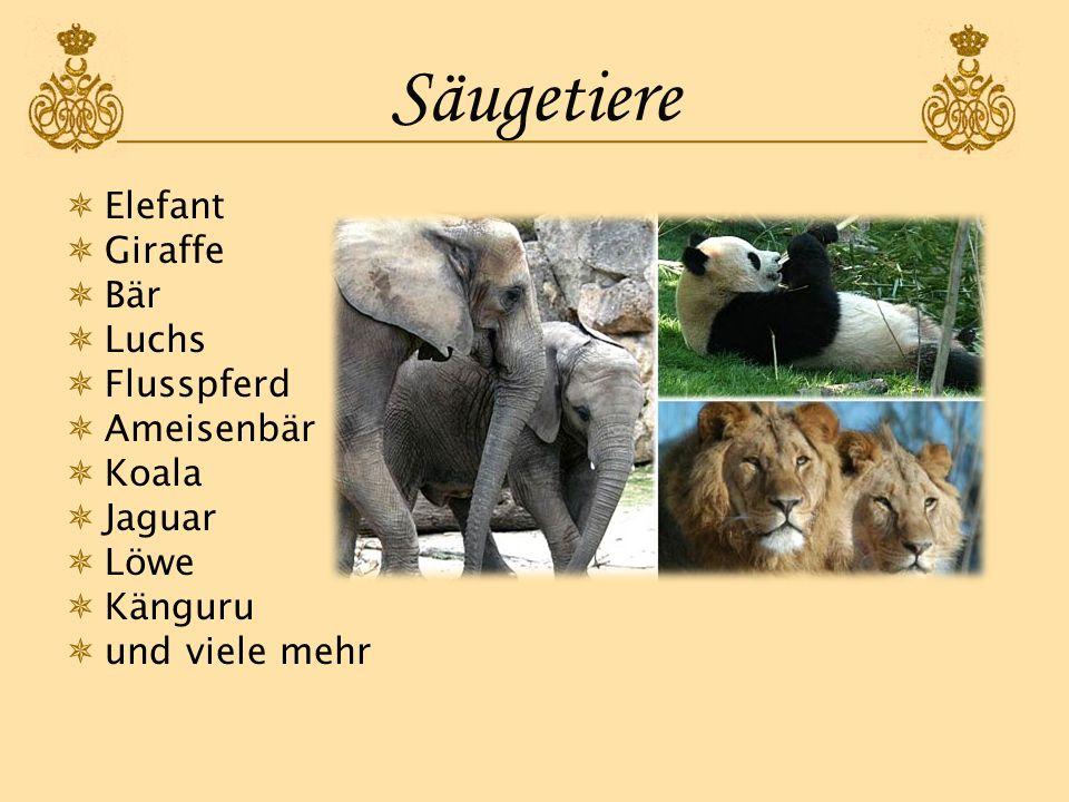Säugetiere Elefant Giraffe Bär Luchs Flusspferd Ameisenbär Koala Jaguar Löwe Känguru und viele mehr