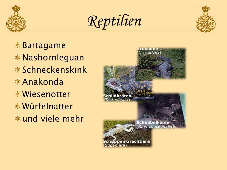 Reptilien Bartagame Nashornleguan Schneckenskink Anakonda Wiesenotter Würfelnatter und viele mehr