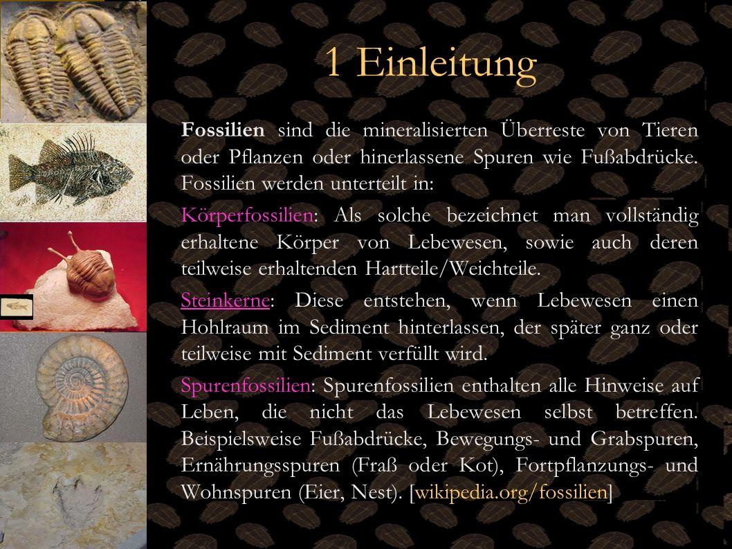 1 Einleitung Fossilien sind die mineralisierten Überreste von Tieren oder Pflanzen oder hinerlassene Spuren wie Fußabdrücke. Fossilien werden untertei