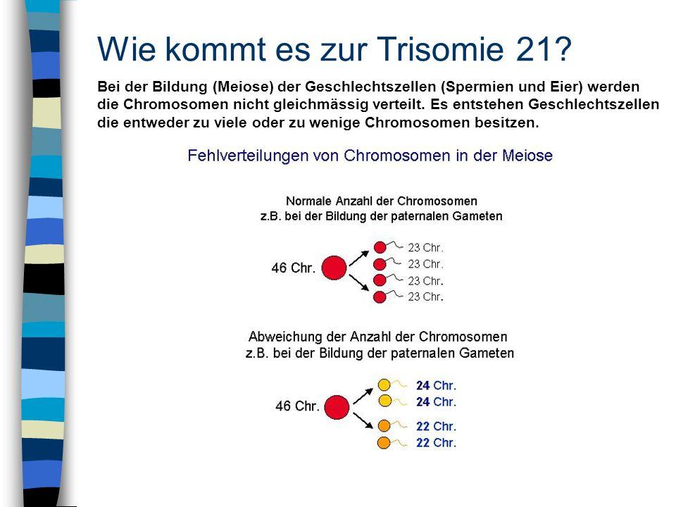 Wie kommt es zur Trisomie 21? Bei der Bildung (Meiose) der Geschlechtszellen (Spermien und Eier) werden die Chromosomen nicht gleichmässig verteilt. E