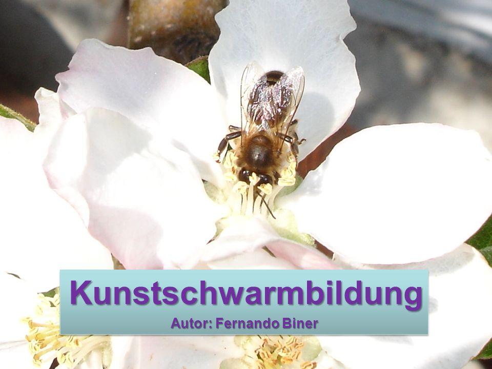 18.04.2014 © VDRB 2009 1 Kunstschwarmbildung Autor: Fernando Biner Kunstschwarmbildung