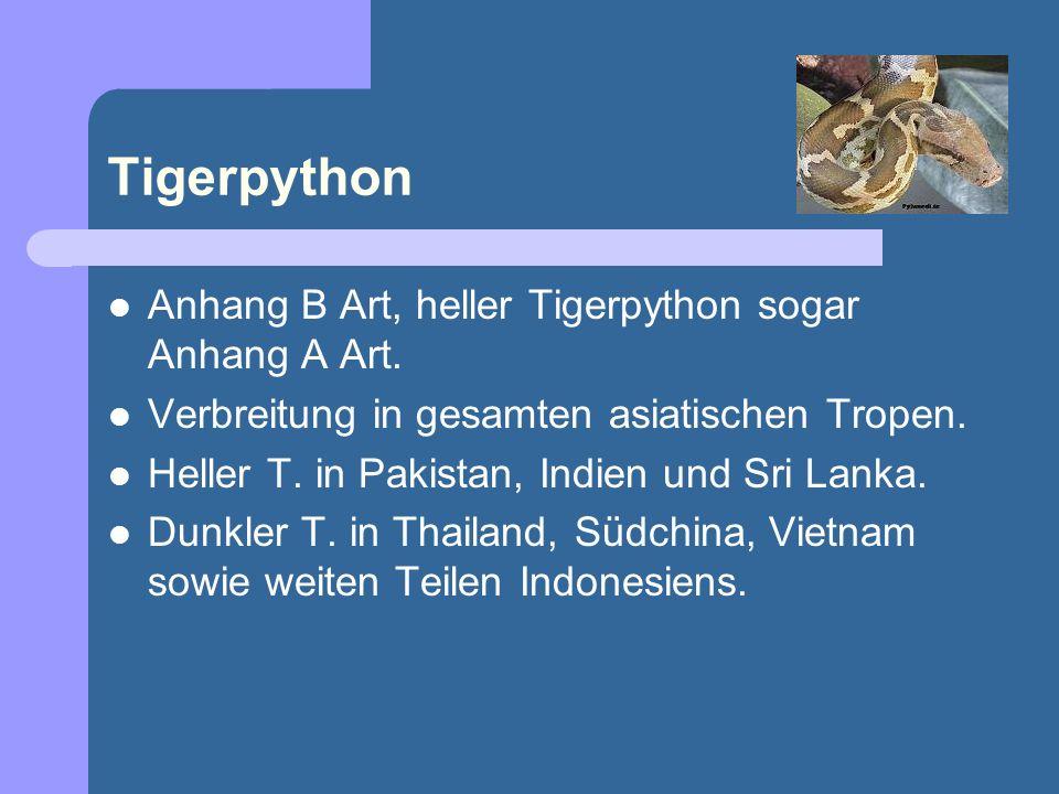 Anhang B Art, heller Tigerpython sogar Anhang A Art. Verbreitung in gesamten asiatischen Tropen. Heller T. in Pakistan, Indien und Sri Lanka. Dunkler
