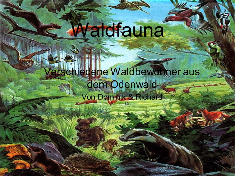 Waldfauna Verschiedene Waldbewohner aus dem Odenwald Von Dominik & Richard