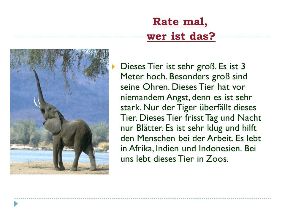 der Hunddie Entedas Schafdie Kuh das Huhndie Katzedie Gansdie Ziege das Schweindas Pferdder Hahnder Esel Wir spielen Tierdomino !