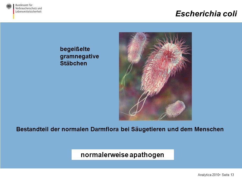 Analytica 2010 Seite 13 Escherichia coli begeißelte gramnegative Stäbchen normalerweise apathogen Bestandteil der normalen Darmflora bei Säugetieren und dem Menschen