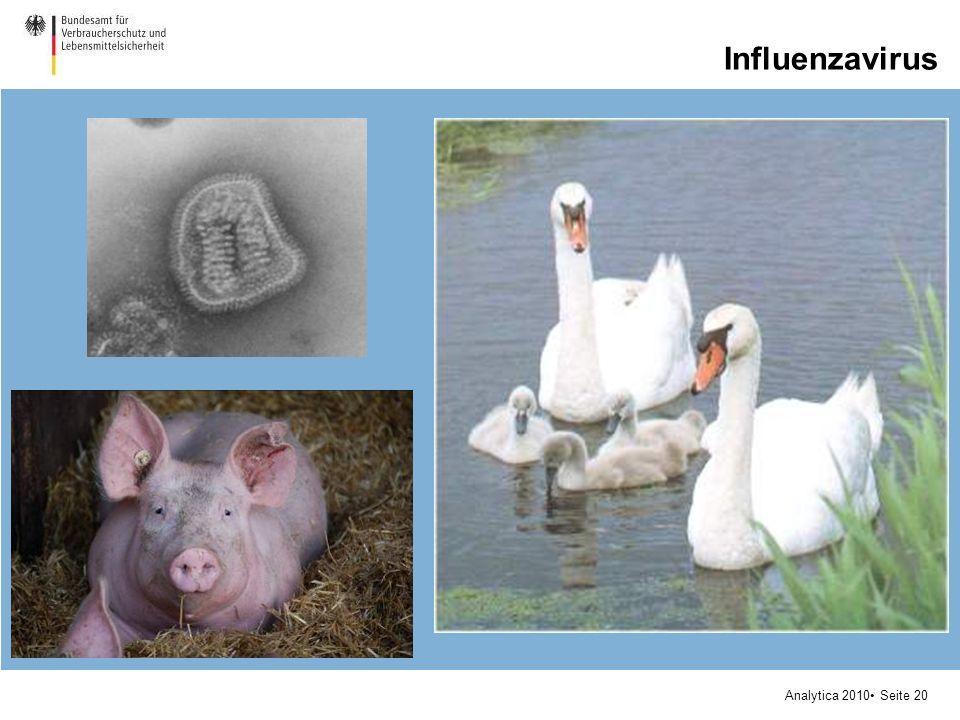 Analytica 2010 Seite 20 Influenzavirus