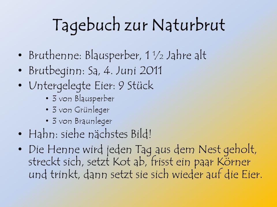 Tagebuch zur Naturbrut Bruthenne: Blausperber, 1 ½ Jahre alt Brutbeginn: Sa, 4.