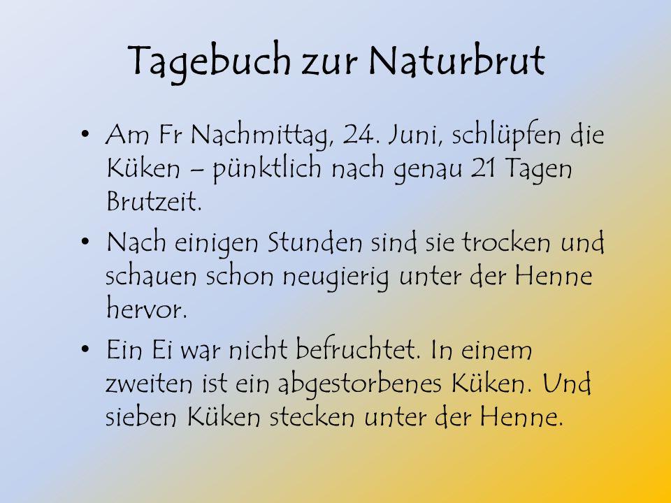Tagebuch zur Naturbrut Am Fr Nachmittag, 24.