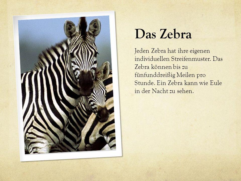 Das Zebra Jeden Zebra hat ihre eigenen individuellen Streifenmuster. Das Zebra können bis zu fünfunddreißig Meilen pro Stunde. Ein Zebra kann wie Eule