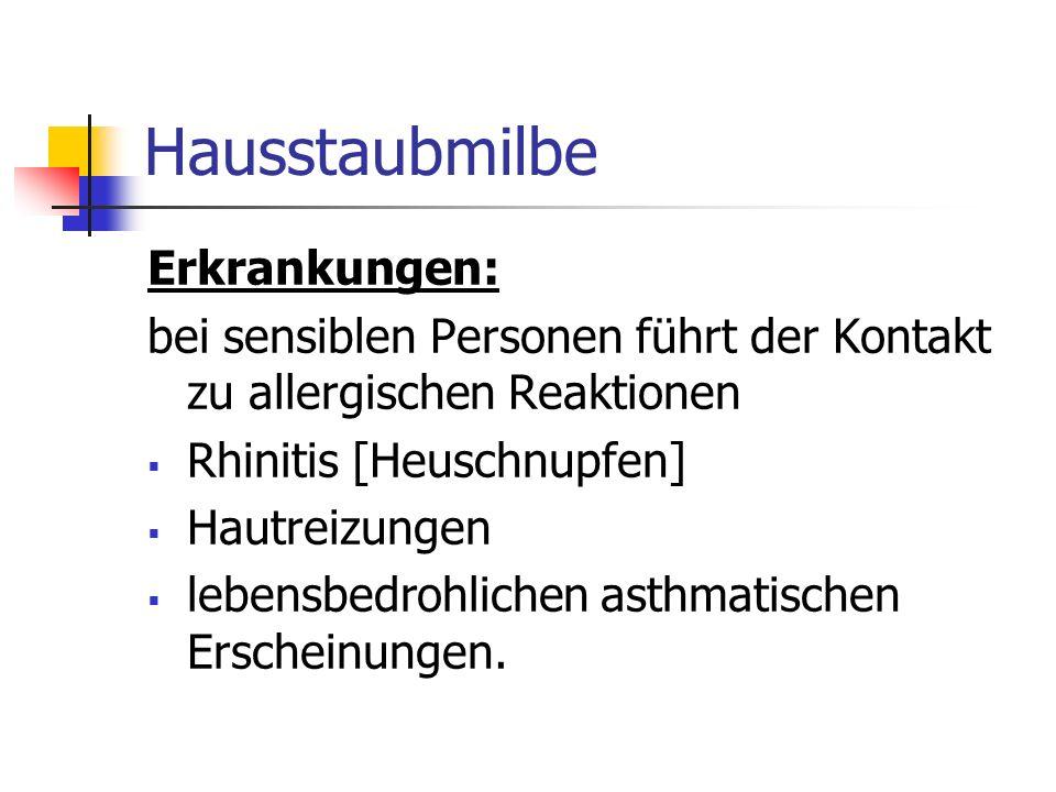 Hausstaubmilbe Erkrankungen: bei sensiblen Personen führt der Kontakt zu allergischen Reaktionen Rhinitis [Heuschnupfen] Hautreizungen lebensbedrohlic