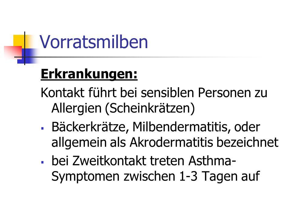 Vorratsmilben Erkrankungen: Kontakt führt bei sensiblen Personen zu Allergien (Scheinkrätzen) Bäckerkrätze, Milbendermatitis, oder allgemein als Akrod