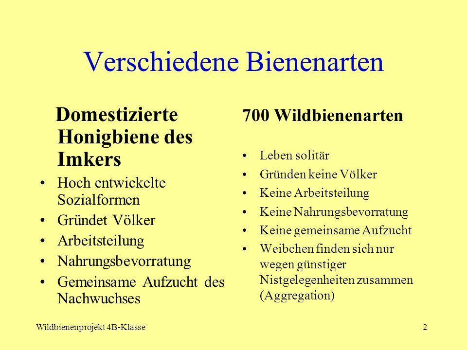 Wildbienenprojekt der 3B Klasse Leitung: Mag.Peter Räuschl Mitarbeit: 29 SchülerInnen Prof.