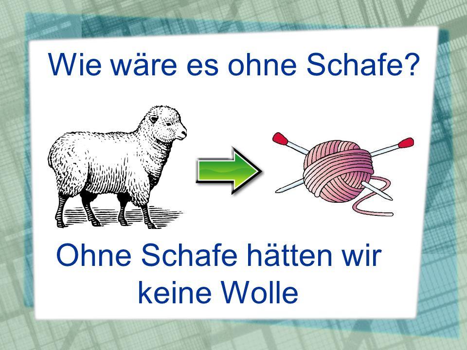 Wie wäre es ohne Schafe? Ohne Schafe hätten wir keine Wolle