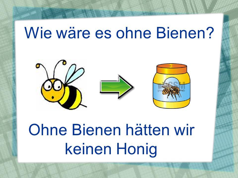 Wie wäre es ohne Bienen? Ohne Bienen hätten wir keinen Honig