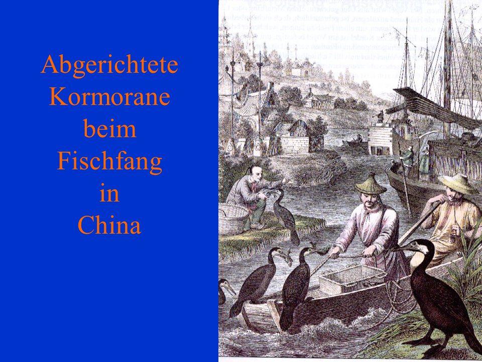 06.12.98H. Lensker Abgerichtete Kormorane beim Fischfang in China