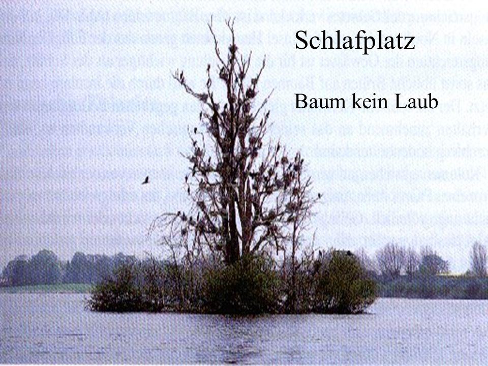 06.12.98H. Lensker Schlafplatz Baum kein Laub