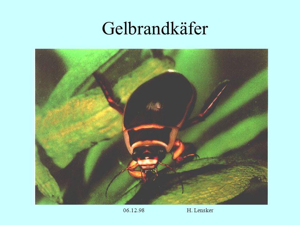 06.12.98H. Lensker Gelbrandkäfer