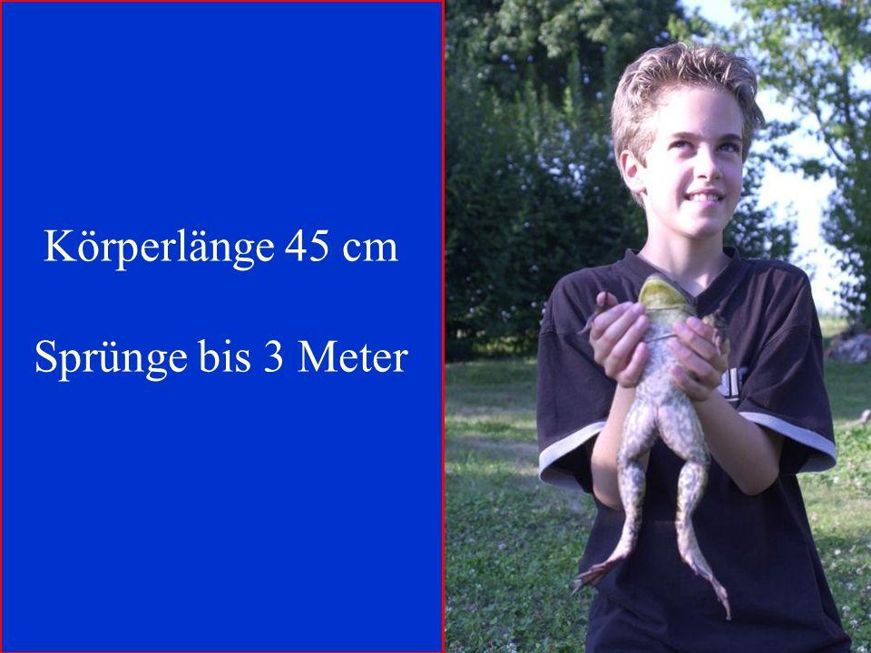 06.12.98H. Lensker Körperlänge 45 cm Sprünge bis 3 Meter