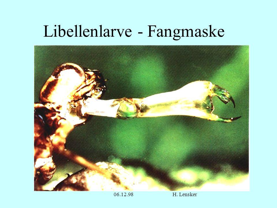 06.12.98H. Lensker Libellenlarve - Fangmaske