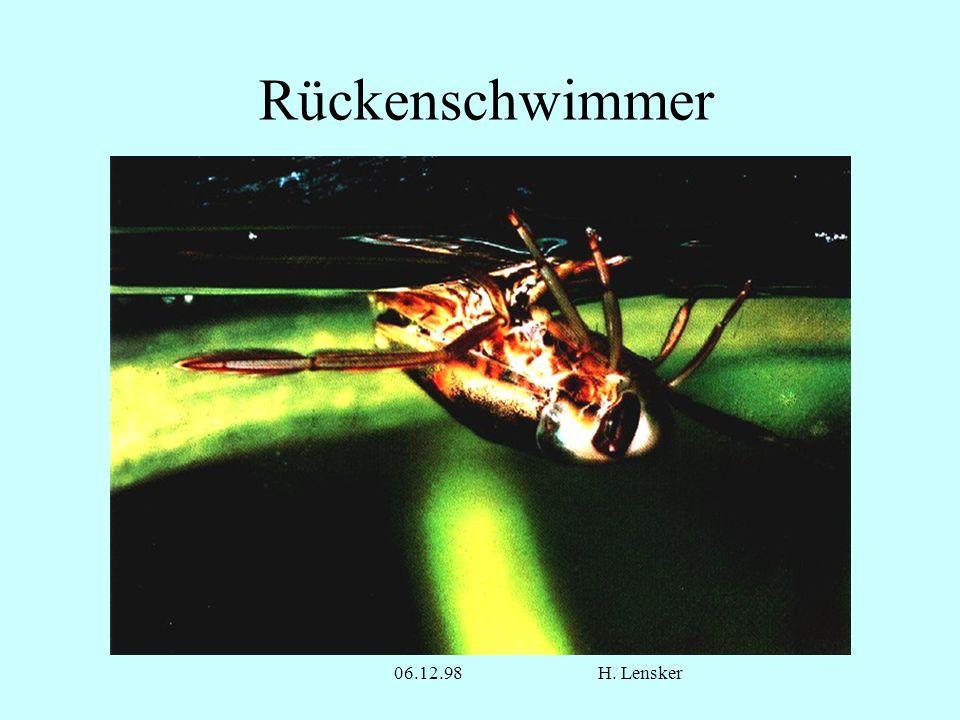 06.12.98H. Lensker Rückenschwimmer