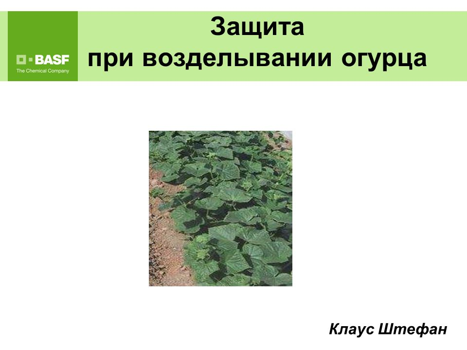 Применение гербицидов на огурце