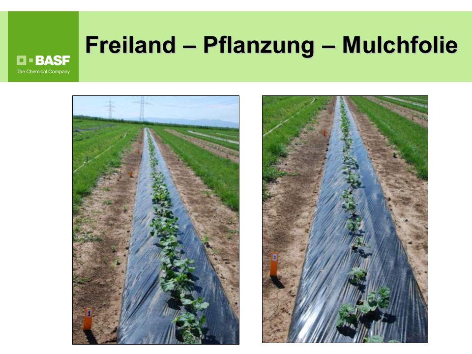 Freiland – Pflanzung – Mulchfolie