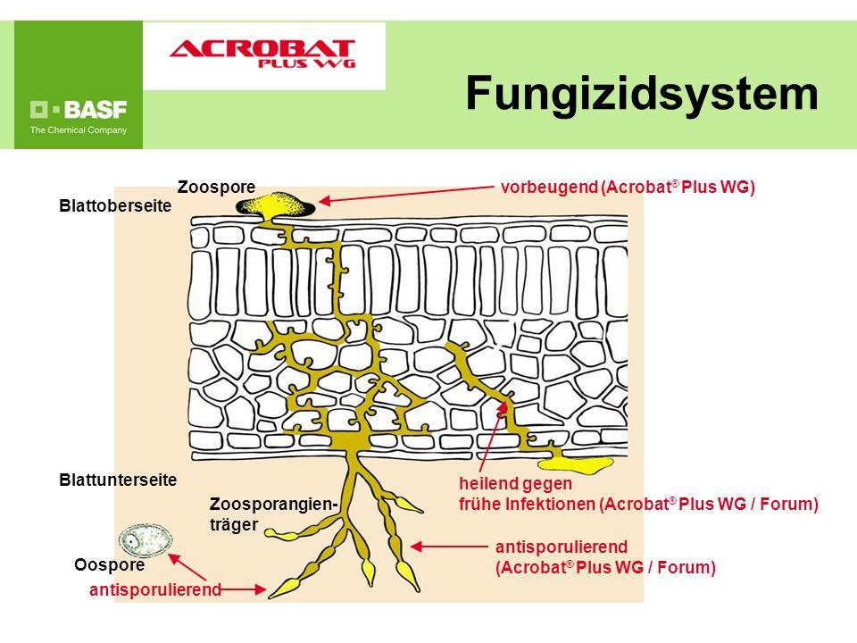 Blattoberseite Zoospore Blattunterseite Oospore Zoosporangien- träger vorbeugend (Acrobat ® Plus WG) heilend gegen frühe Infektionen (Acrobat ® Plus W