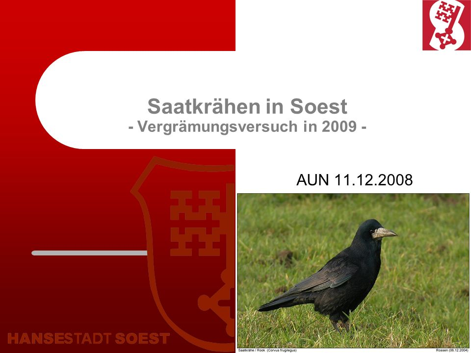 2 Saatkrähen - ganz allgemein Die Saatkrähe ist ein typischer Brutvogel des Kreises Soest.