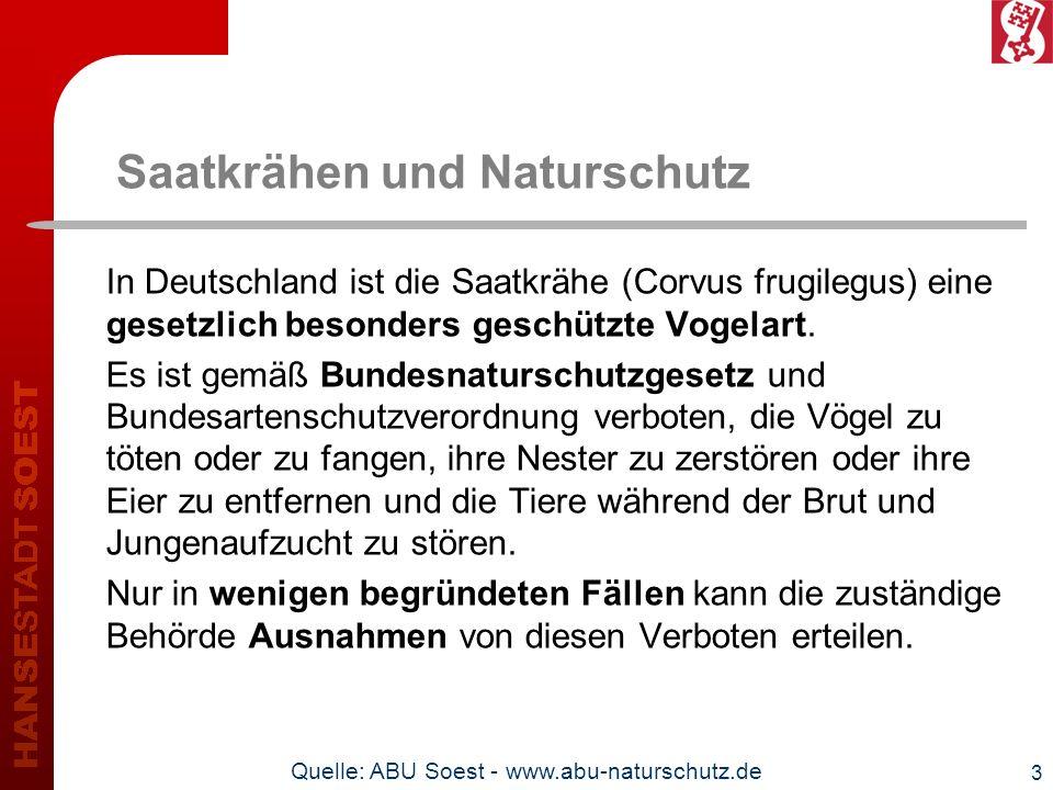 3 Saatkrähen und Naturschutz In Deutschland ist die Saatkrähe (Corvus frugilegus) eine gesetzlich besonders geschützte Vogelart. Es ist gemäß Bundesna
