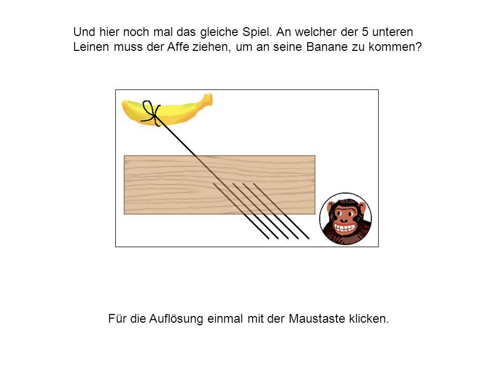 Und hier noch mal das gleiche Spiel. An welcher der 5 unteren Leinen muss der Affe ziehen, um an seine Banane zu kommen? Für die Auflösung einmal mit