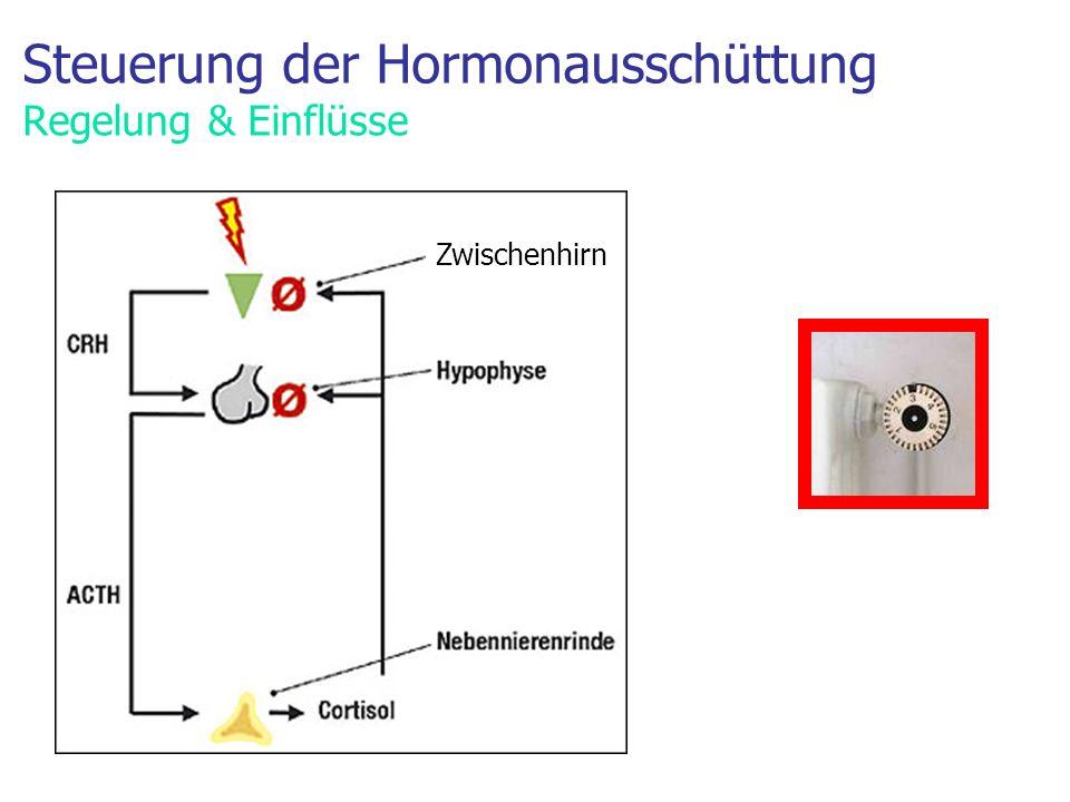 Steuerung der Hormonausschüttung Regelung & Einflüsse Zwischenhirn