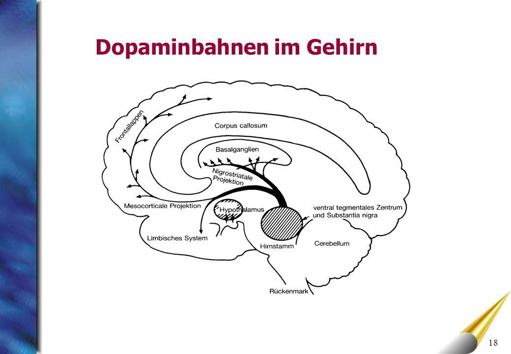 18 Dopaminbahnen im Gehirn