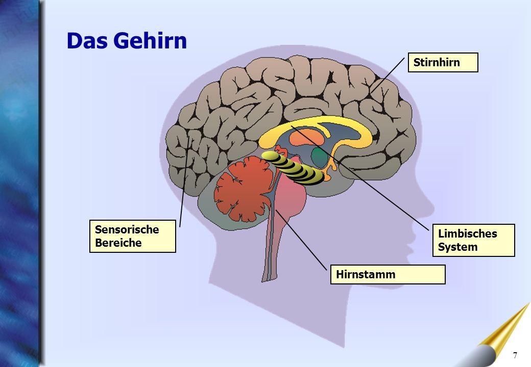 7 Limbisches System Stirnhirn Sensorische Bereiche Hirnstamm Das Gehirn