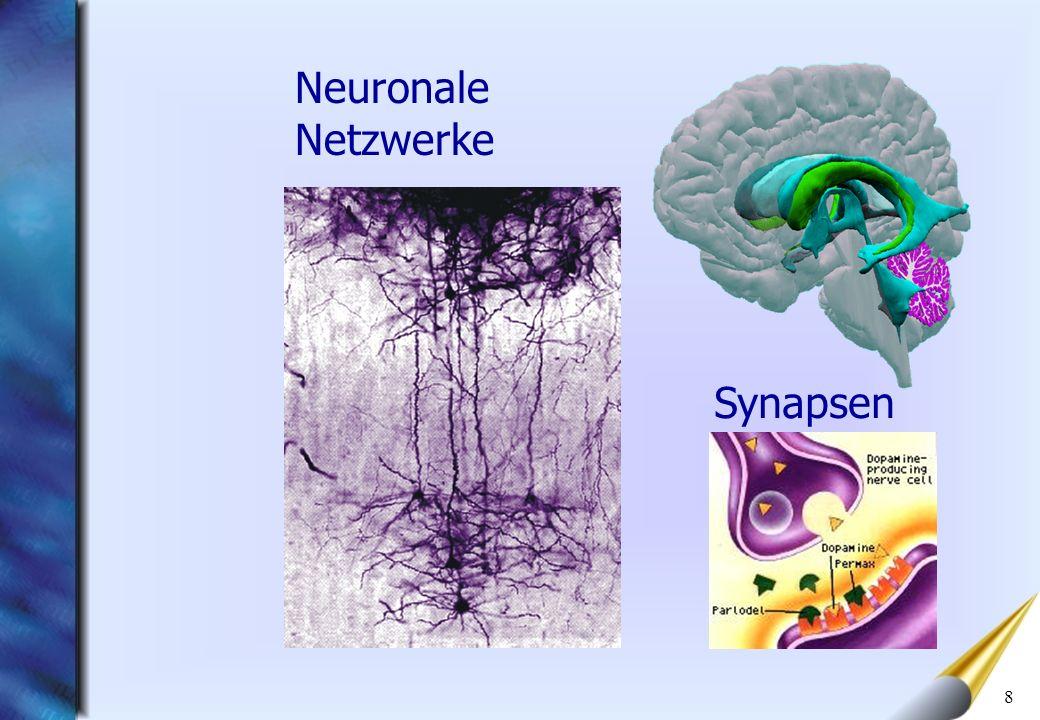8 Synapsen Neuronale Netzwerke
