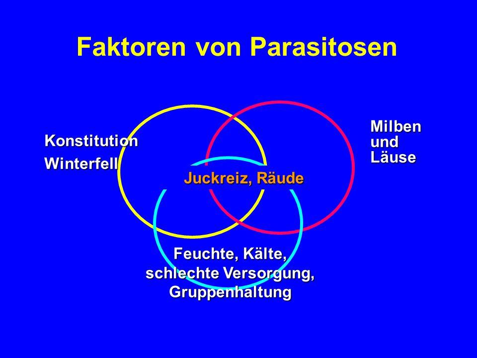 Faktoren bei Sommerräude Erbliche Konstitution Waldrand bei Wiesen, Sommer Culicoides Juckreiz, Schuppen