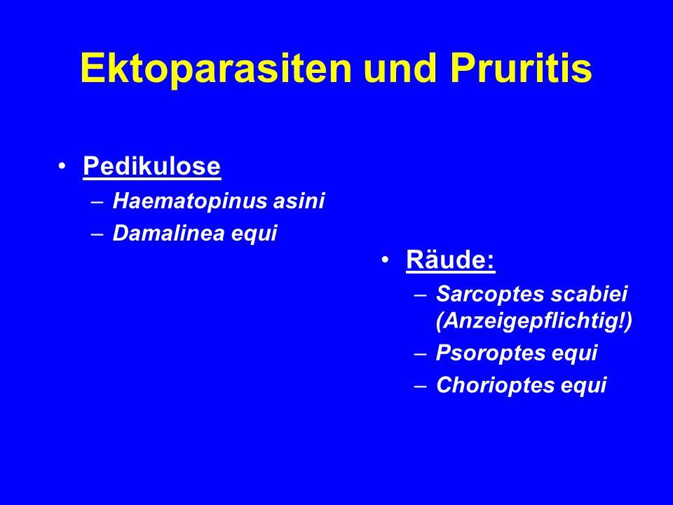 Ektoparasiten und Pruritis Pedikulose –Haematopinus asini –Damalinea equi Räude: –Sarcoptes scabiei (Anzeigepflichtig!) –Psoroptes equi –Chorioptes equi