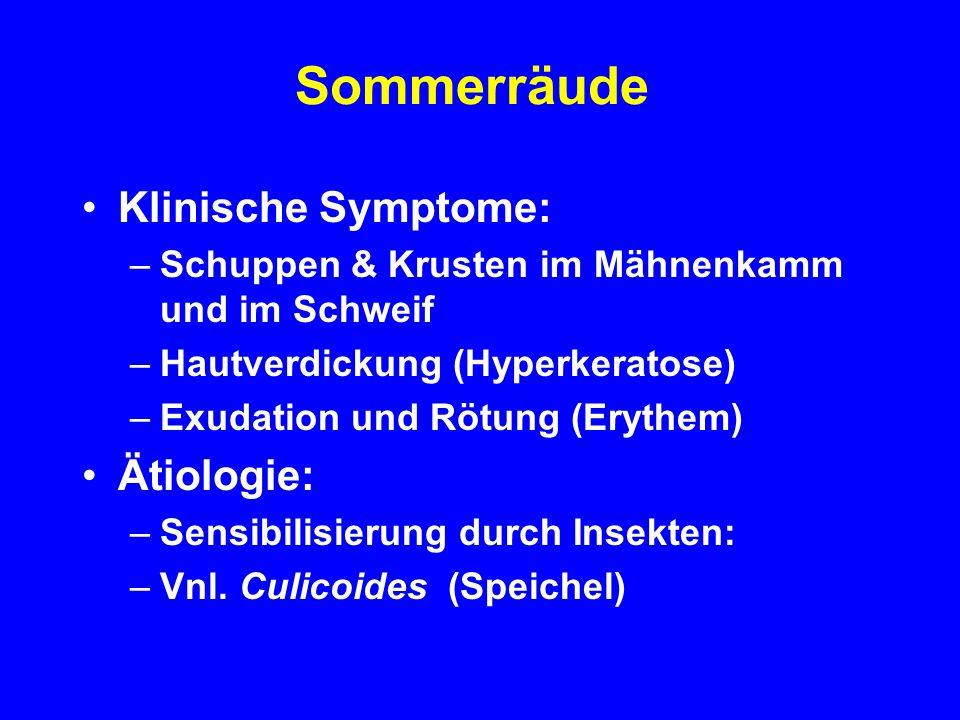 Sommerräude Klinische Symptome: –Schuppen & Krusten im Mähnenkamm und im Schweif –Hautverdickung (Hyperkeratose) –Exudation und Rötung (Erythem) Ätiologie: –Sensibilisierung durch Insekten: –Vnl.
