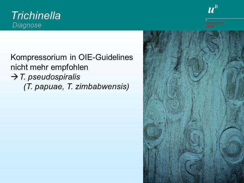 ubub b UNIVERSITÄT BERN Trichinella Diagnose Kompressorium in OIE-Guidelines nicht mehr empfohlen T. pseudospiralis (T. papuae, T. zimbabwensis)