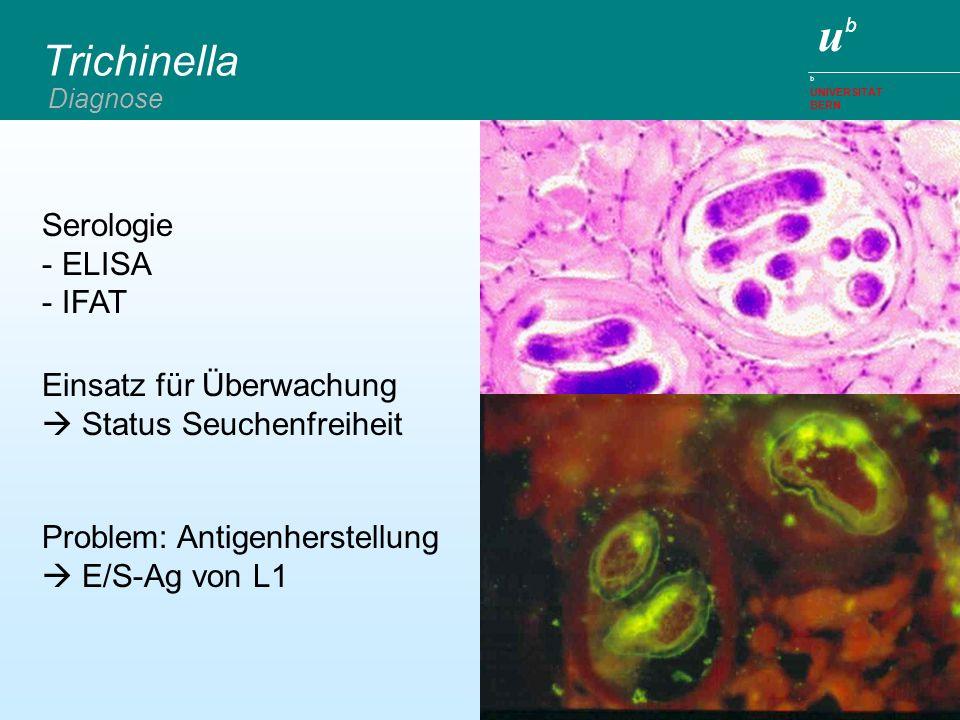 ubub b UNIVERSITÄT BERN Trichinella Diagnose Serologie -ELISA -IFAT Problem: Antigenherstellung E/S-Ag von L1 Einsatz für Überwachung Status Seuchenfr
