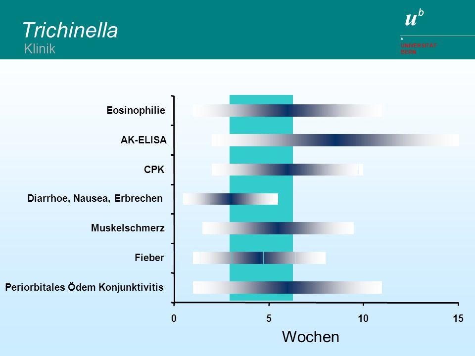 ubub b UNIVERSITÄT BERN Trichinella 051015 Periorbitales Ödem Konjunktivitis Fieber Muskelschmerz Diarrhoe, Nausea, Erbrechen CPK AK-ELISA Eosinophili